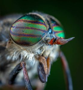 Close up of an insect